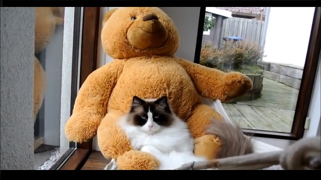 She Gave Her Grumpy Cat a Teddy Bear but Never Expected This!