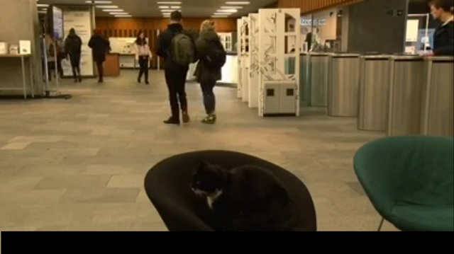 A Cat is Given his Own University Library Card