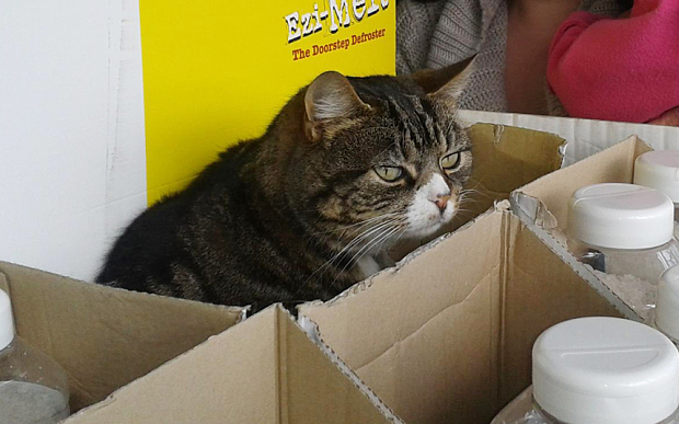 Meet the Cat Who Has Lived in a Supermarket for Four Years