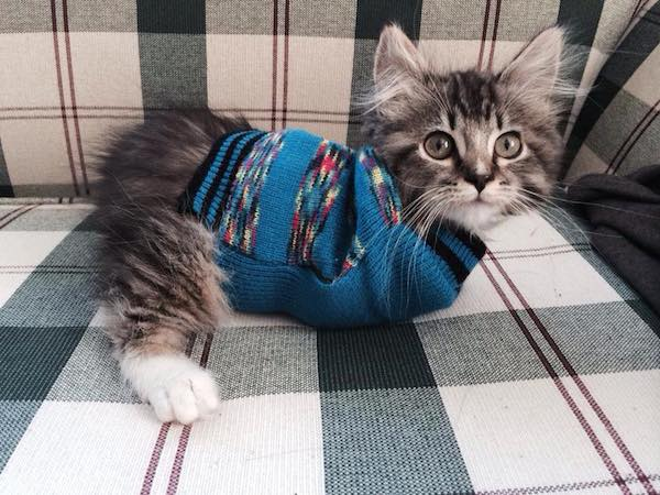 This is Pancake:  The Kitten with Only Two Legs