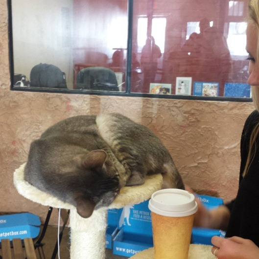 Cat Cafe Threatens Kids Who Won't Stop Tormenting the Animals
