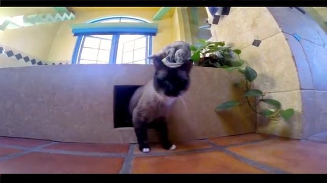 Man Turns his Apartment into a Cat Utopia