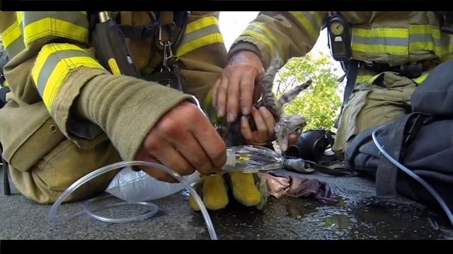 A Fireman Found a Lifeless Kitten but Never gave up Hope