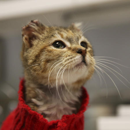 The Tale of Sunny the Cat Demonstrates Plight of Cats in the Cold