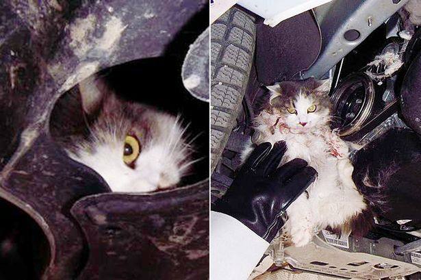 Mechanic Finds a Cat in Truck Engine after Driver Reports Burning Smell