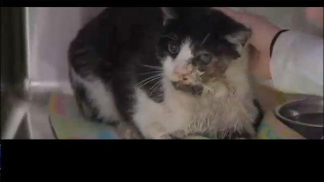 A Cat Shows Up in a Neighbor's Yard Five Days After Being Buried