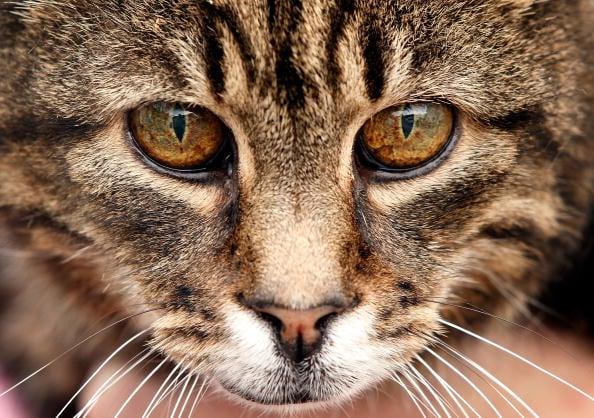 Ten Jobs Cats Do Better than Humans