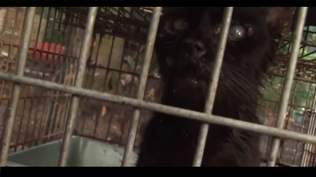 700 Cats Rescued from Horrible Conditions in One Home