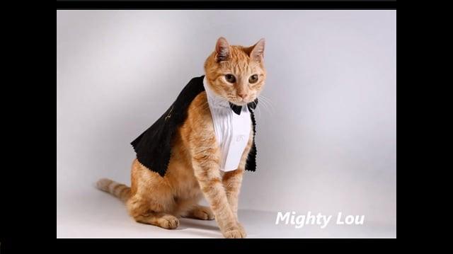 Meet Mighty Lou:  The Amazing Special Needs Ambassador Cat