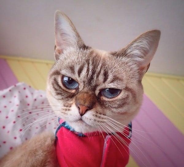 Sauerkraut is the Internet's Newest Grumpy Faced Cat Sensation