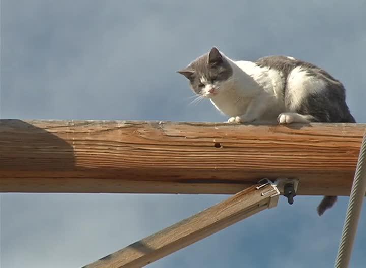 Cat stuck up pole