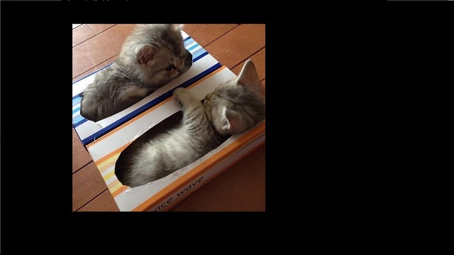 Cats Prove They Can Squeeze Into Anything for a Nap