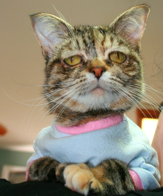 """Cat Dubbed the """"Saddest"""" Finds a Home"""