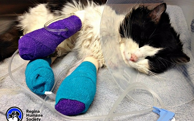Good Samaritans Donate thousands to help abused cat 'Bruce Almighty'