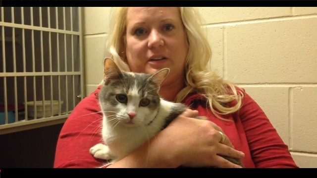 Cat Who is Thrown into Icy Waters is Saved