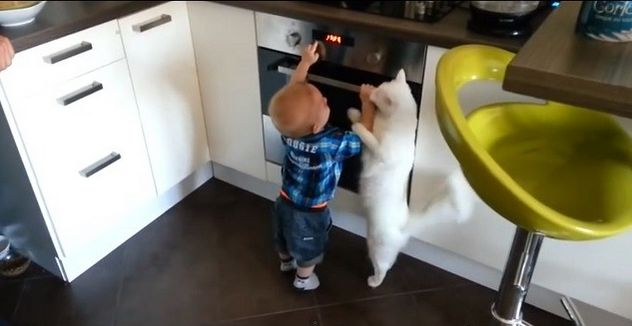 Check Out This Heroic Family Cat Saving Toddler from a Hot Stove