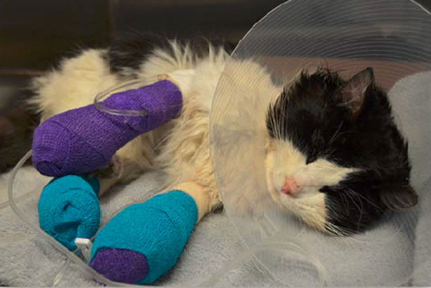 Show Your Support in Raising Money for this Badly Bandaged Cat