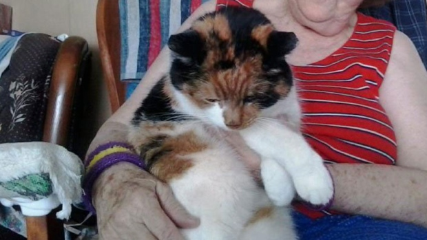 Missing 18-Year-Old Cat Found Under Snow-Covered Deck after 2 Months