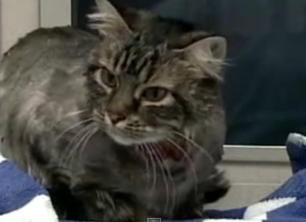 Abandoned Cat Who Was Left Unrecognizable Makes Incredible Recovery