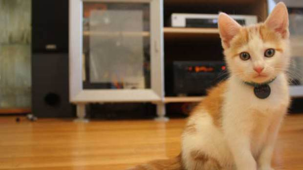 Kitten Found with Paws Frozen to a Fence Finds a New Home