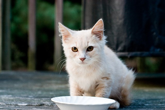 FDA Warns that a Topical Painkiller is Toxic to Cats