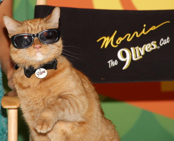10 Reality Cat Shows we Need on TV Now