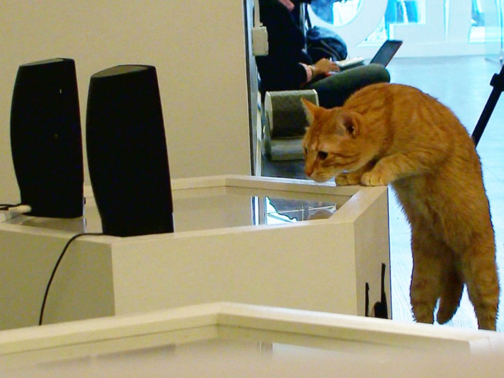 Cats Listen to Cat Music at a Cat Cafe