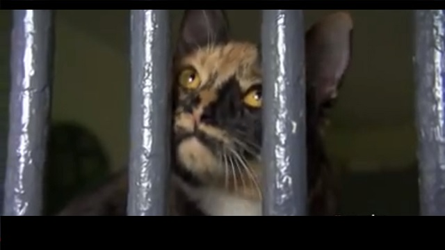 Prison Cats Make an Incredible Difference in Inmates Lives