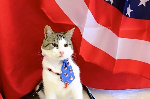 Adorable Special Needs Cat Wonky is Running for Office in Texas