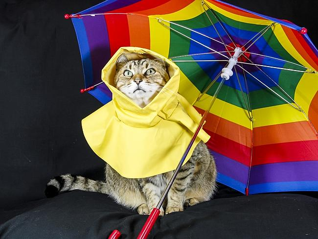 Boo Boo is the Cranky Cat with an Outfit for Any Occasion