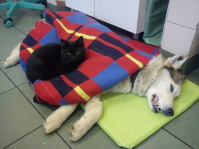 Adorable Cat is a Nurse at a Polish Animal Shelter…..Seriously
