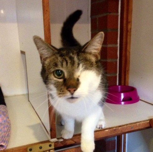 Can You Help Find a Home for this One Eyed Cat?