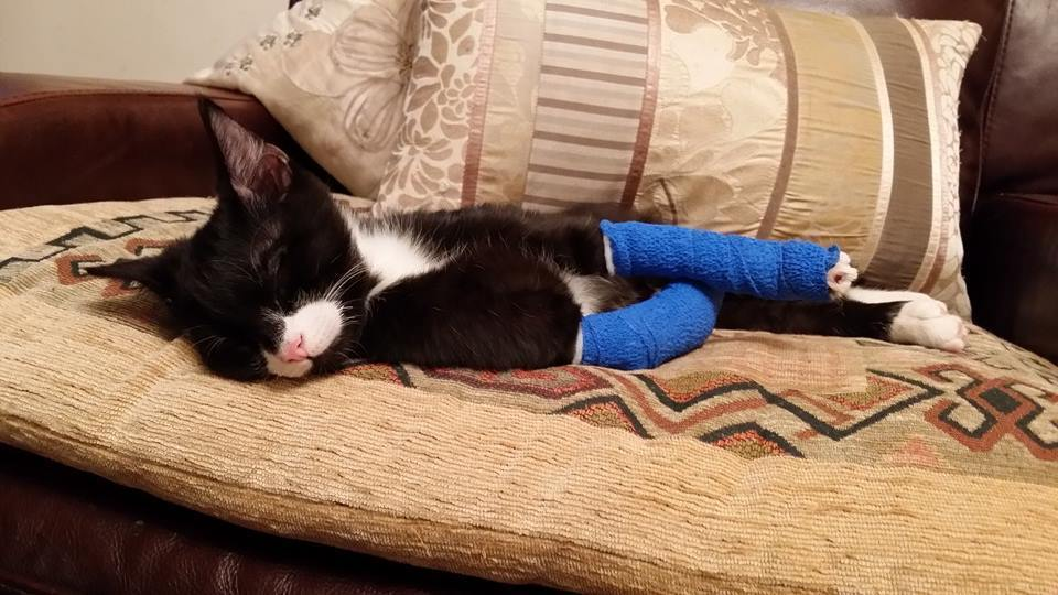 Special Little Cat Will Get The Surgery He Needs After Donors Around The World Step Up