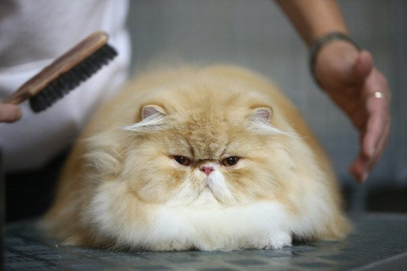 15 Pictures of Cats Who Think They are People