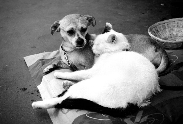 20 Cats Who Prefer Dogs to Pillows