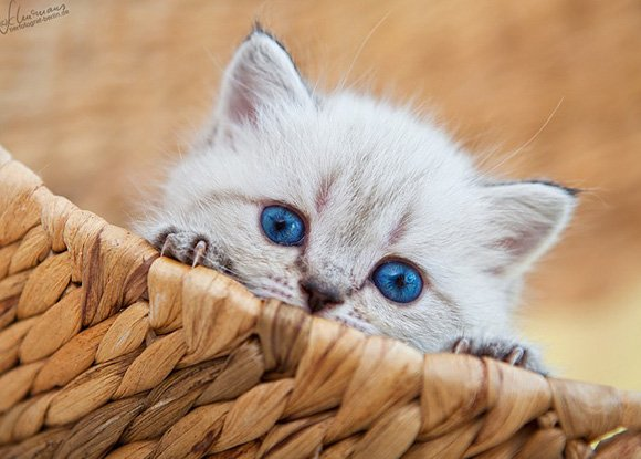 The 50 Cutest Kitten Pictures of All-Time