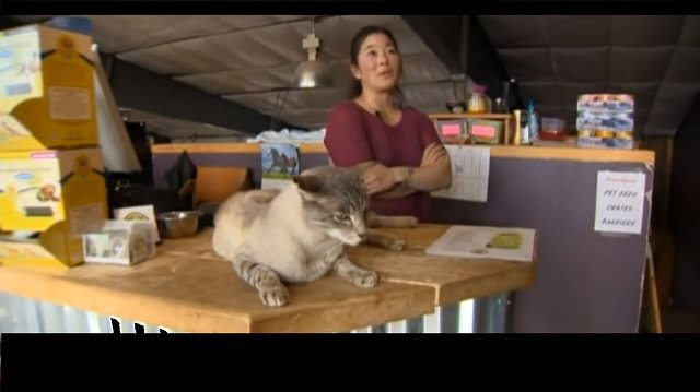 Meet the 25-Pound Cat Who Is Helping Other Cats Get Adopted