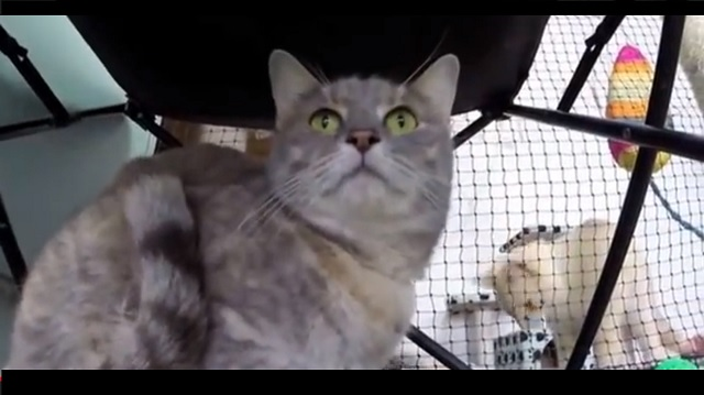 Missing cat discovered 49 days later trapped alive in shipping container on other side of Australia