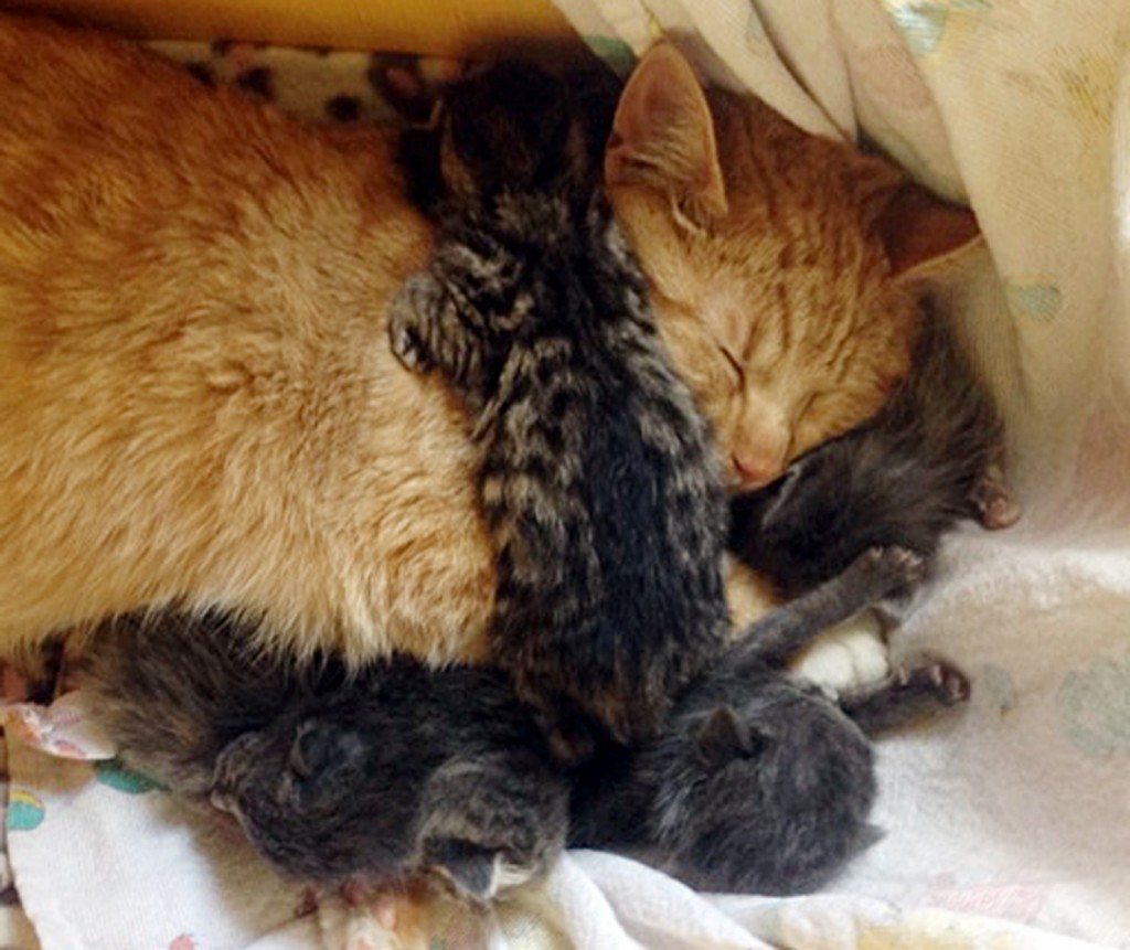 Special Needs Cat Adopts Abandoned Kittens