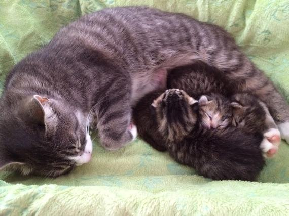 A Grieving Cat is Given a Second Chance at Motherhood