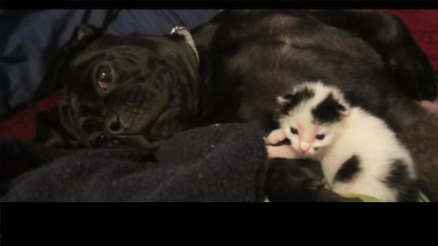 kitten under log