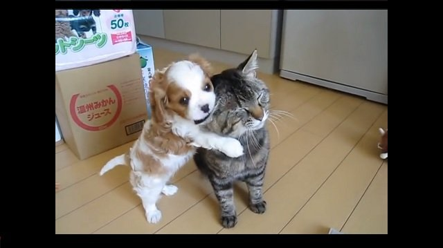 After Meeting The New Puppy, Cat Proves How Patient He Can Be