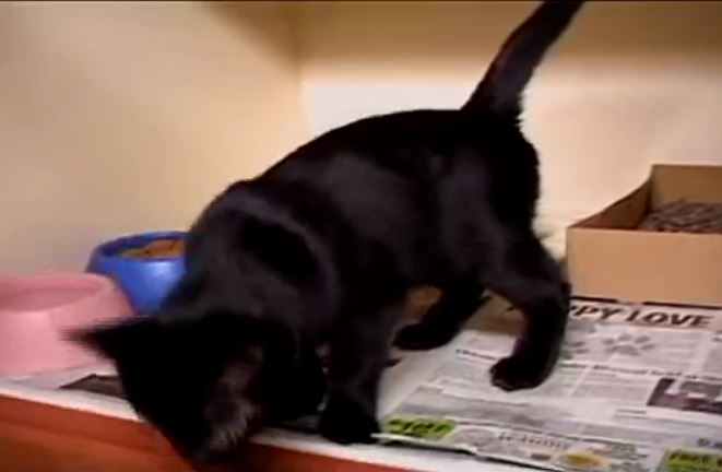 Blind Cat Named Ray Gets a Second Chance at Life