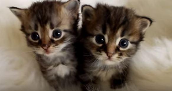 sphynx kittens for sale in wisconsin