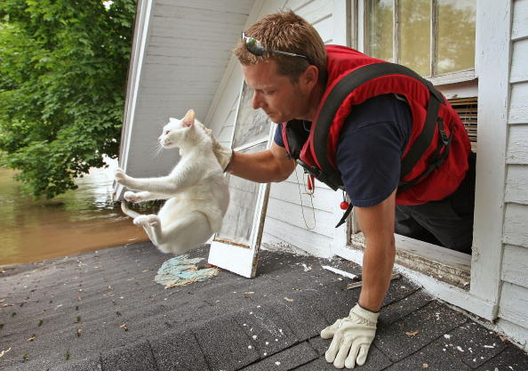 50 Amazing Pictures of Cats with Firefighters