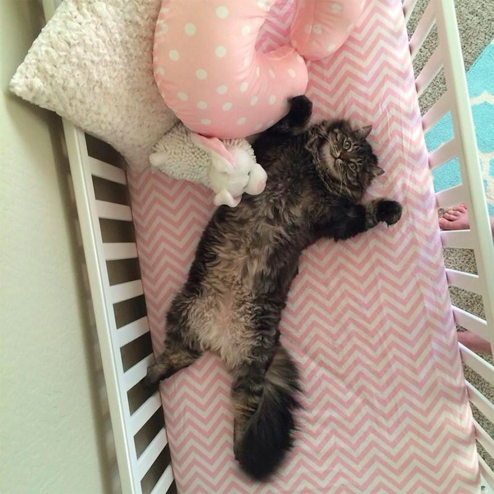 This Cat Actually Thinks The New Baby Crib Is For Him!