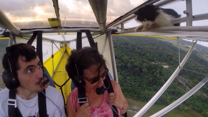 Bet You Never Thought You'd See a Cat Clinging to the Wing of a Flying Plane Before