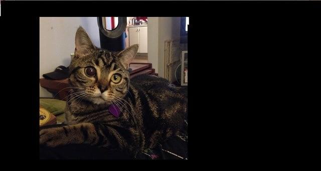 Matilda The Alien Cat Is the Latest Instagram Star