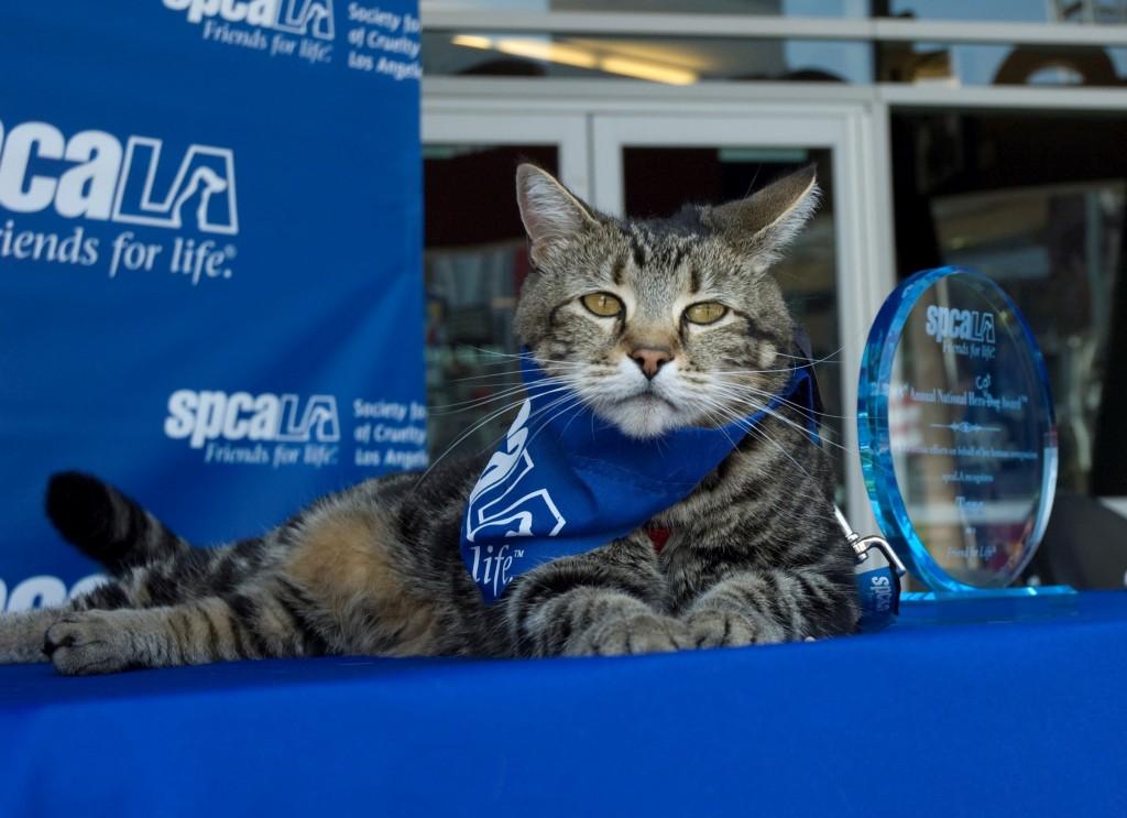 Heroic Cat Tara Receives a Hero Dog Award!