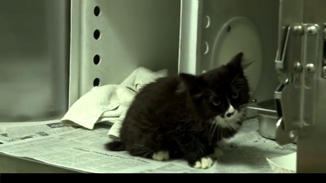 Adorable Black and White Kitten is Rescued from a Busy Highway